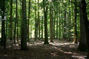 Tauche mit mir ein in die Waldatmosphäre.